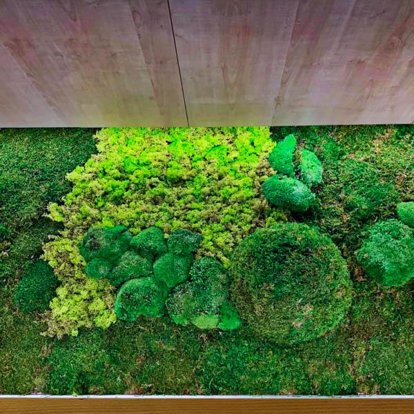Jardines Verticales Preservados